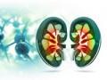 Enfermedad crónica renal y nefropatía diabética